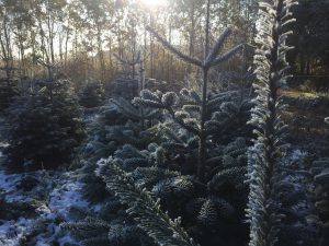 frost-i-plantagen